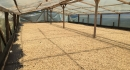 Colombia, The New Main Crop is on its way! (10)