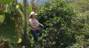 Colombia, The New Main Crop is on its way! (5)
