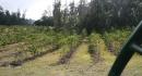 kona-parry-estate-visit-part2-012