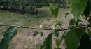 kona-parry-estate-visit-part2-019