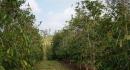 kona-parry-estate-visit-part2-029