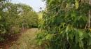 kona-parry-estate-visit-part2-030