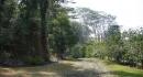 kona-parry-estate-visit-part2-040