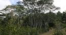 kona-parry-estate-visit-part2-050