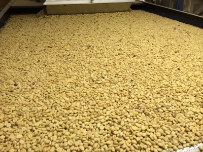 Our Cauca Valley Prized Micro Lots have arrived!