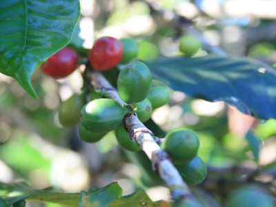 Colombia Cauca Micro lots on the way!